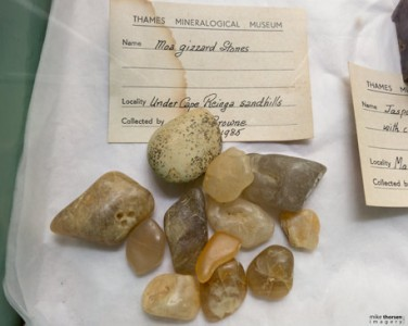 Collection of Thames Mineralogical Museum, Coromandel, New Zealand.
