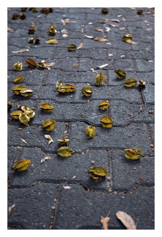 2010, horticultural intervention, public art project, terminalia arjuna seeds (sterilized) yellow paint.