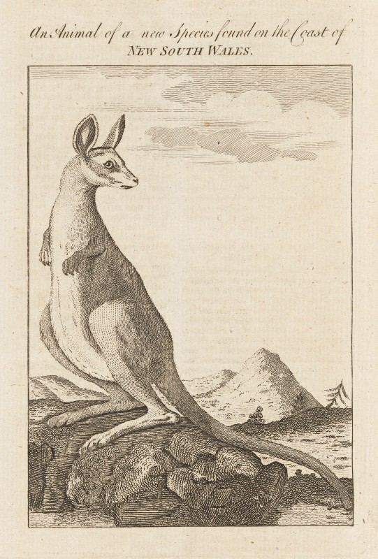 1773, plate facing p. 320 from <i>The Gentleman's Magazine</i>, 43, July 1773, etching and engraving, 21.3 x 13.2 cm (sheet). Collection National Gallery of Victoria, Melbourne  (2013.741).